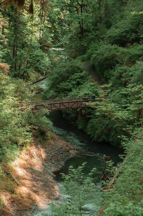 pnw, 人行天橋, 俄勒岡州 的 免費圖庫相片