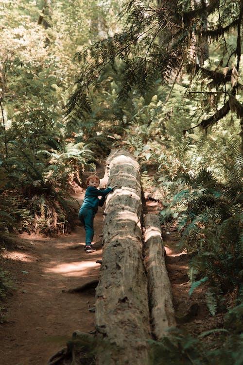 Boy Standing next to Fallen Tree in Forest