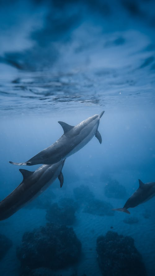 Playful young dolphin swimming in sea