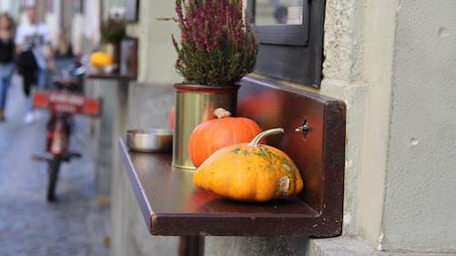 Free stock photo of barvy podzimu, dýně, oranžová
