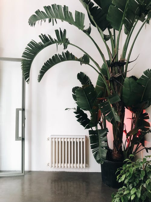 Potted plant in black pot placed in living room