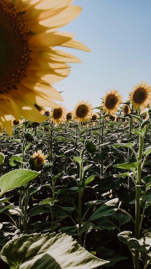 Fotobanka sbezplatnými fotkami na tému agronómia, botanika, čerstvý