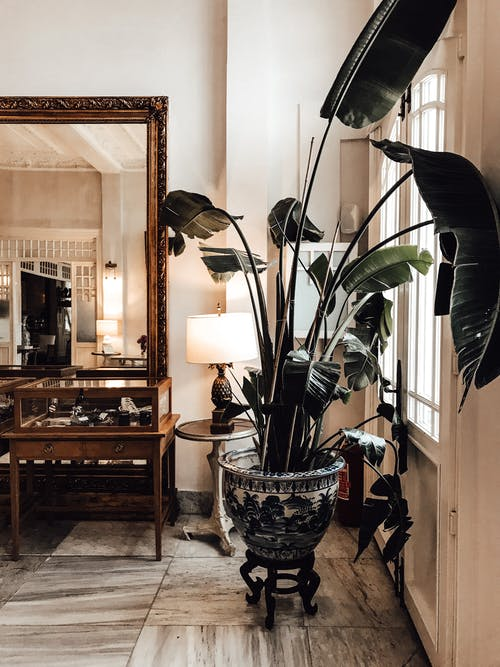 Stylish interior with potted plant