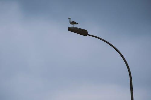 Free stock photo of bird, istanbul, silhouette