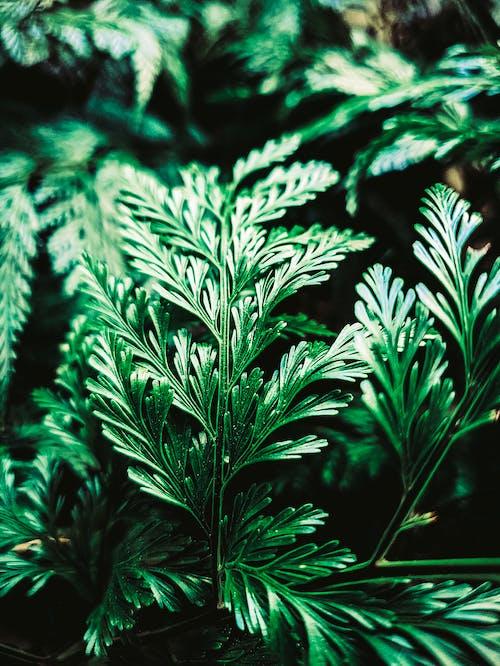 Foto d'estoc gratuïta de folhas, verd