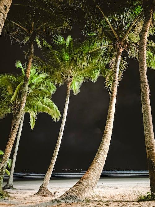 Foto d'estoc gratuïta de a l'aire lliure, aigua, arbre, coqueiro