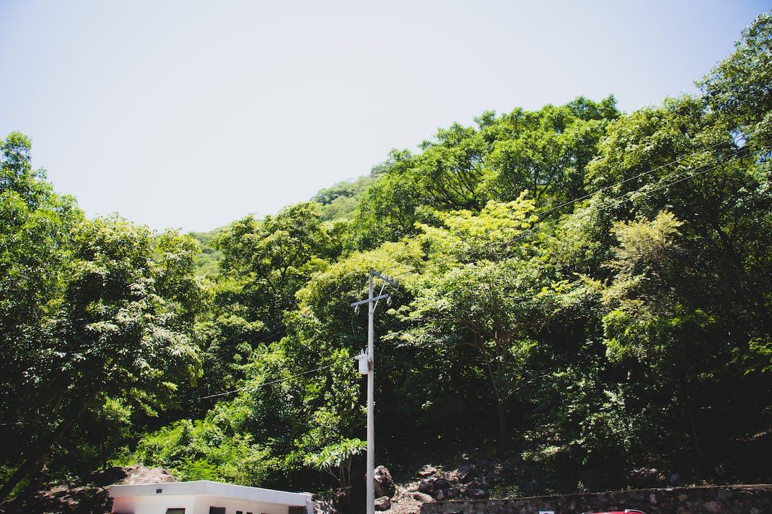 Free stock photo of green trees, greenery, trees