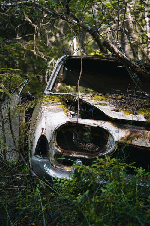 White and Black Car in Forest