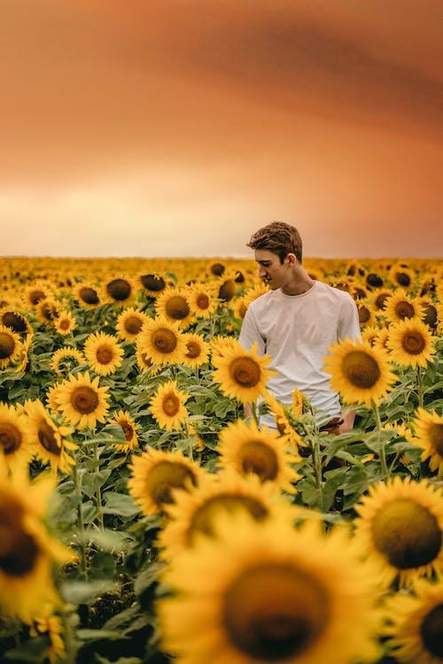 Man in White Dress Shirt Standing on Sunflower Field
