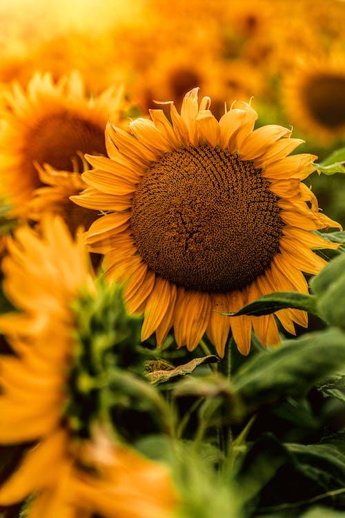 Gratis lagerfoto af efterår, efterår farve, falde, gylden time