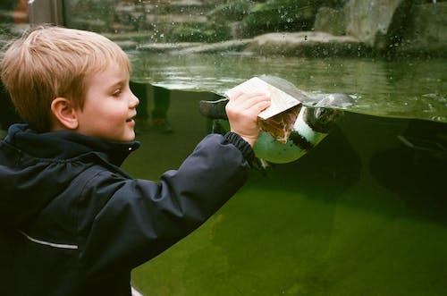 Ảnh lưu trữ miễn phí về cá, Chân dung, con sông, con trai
