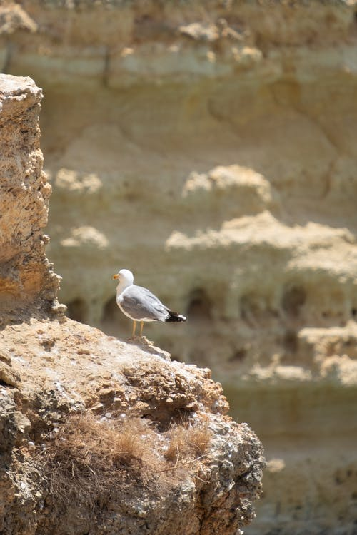 Free stock photo of beach, bird, rocks, summer
