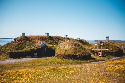 Small cozy houses located on blooming meadow at seaside