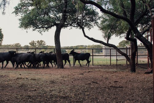一群動物, 公園, 分公司 的 免費圖庫相片