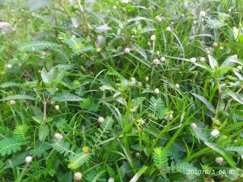 patika boyunca çimen içeren Ücretsiz stok fotoğraf