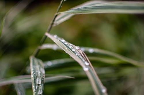 Free stock photo of dešťová kapka, divoká tráva, kapka rosy, kapka vody