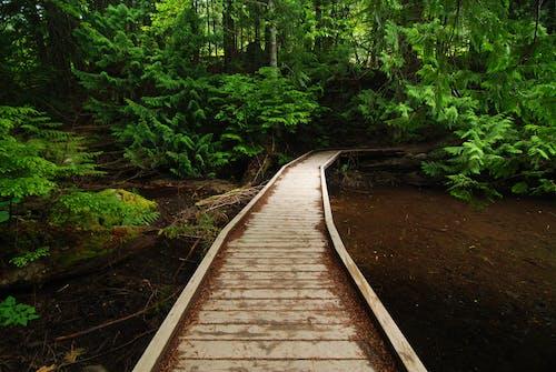 Free stock photo of bažina, bažinatý, čistá energie, dřevěný chodník