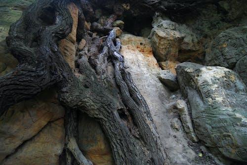 Free stock photo of detail, horská skála, jeskyně, kamenná formace