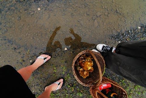 Free stock photo of boty, deštivé, deštivé počasí, houba
