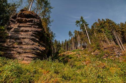 Free stock photo of čisté nebe, detail, divočina, horská cesta