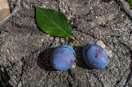 Free stock photo of čerstvé ovoce, chuť, detail, fruktóza