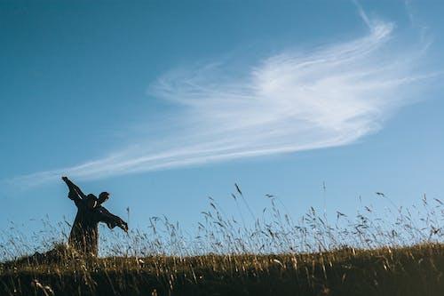 Foto stok gratis air, bayangan hitam, bidang, burung