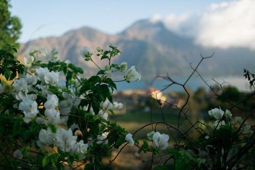 Fotos de stock gratuitas de árbol, arbusto, armonía, aroma