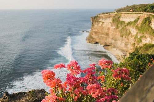 Lush greenery and vibrant delicate pink flowers on top of steep rock above wavy endless ocean under clear sky