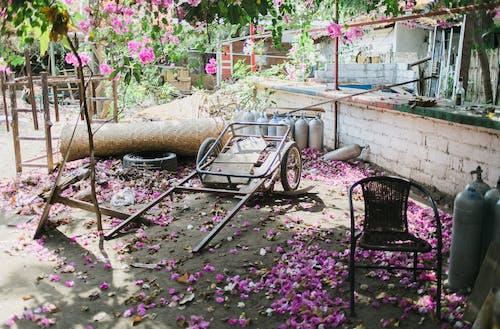 Immagine gratuita di abbandonato, albero, ambiente, bocciolo
