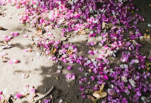 Fallen bright petals on ground
