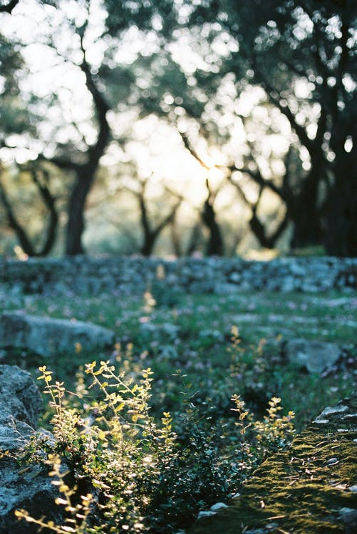 Peaceful meadow with rocky fence