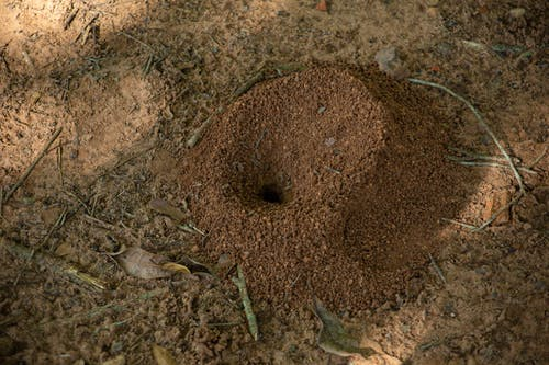From above of wild anthill with hole in middle located on dry sandy ground in countryside in sunny day