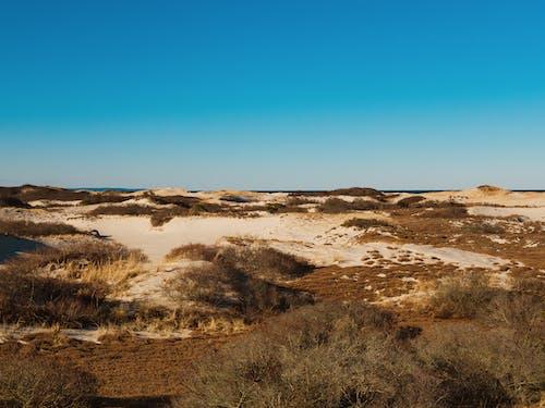 Free stock photo of cape cod, dunes, landscape, nature