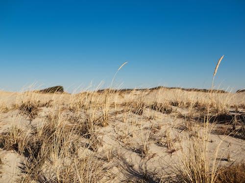 Free stock photo of cape cod, grass, landscape, nature
