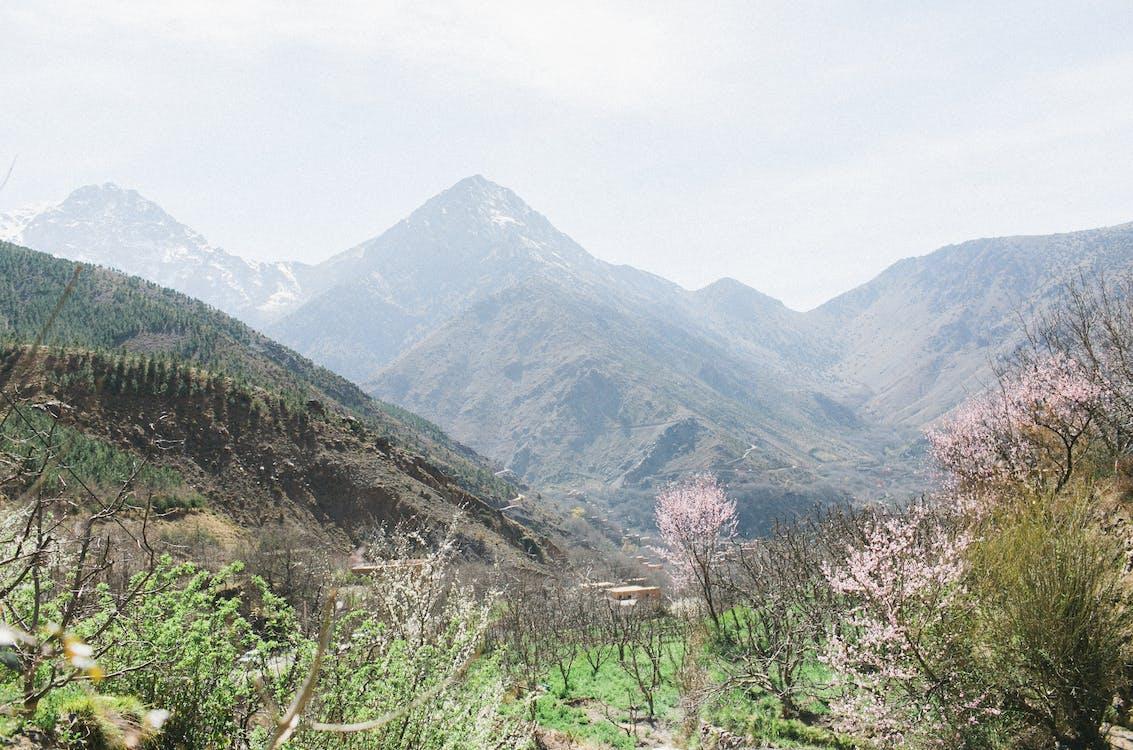 Fotobanka sbezplatnými fotkami na tému buš, čerstvý, cestovný ruch