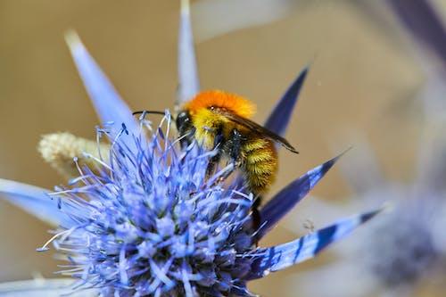 Free stock photo of #flor, #flores, abeja, polen