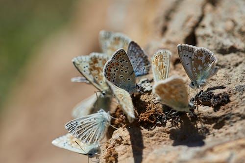 Two Brown Butterflies on Brown Soil