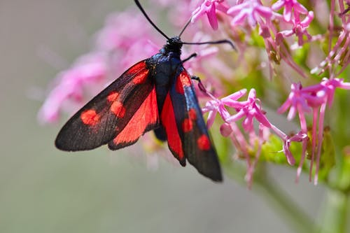 Free stock photo of #mariposa, insecto, mariposa - insecto