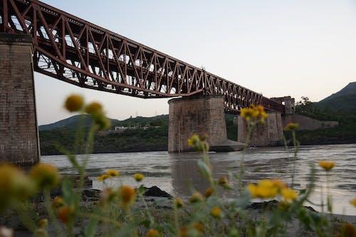 Free stock photo of bridge, Deep Water, flowers