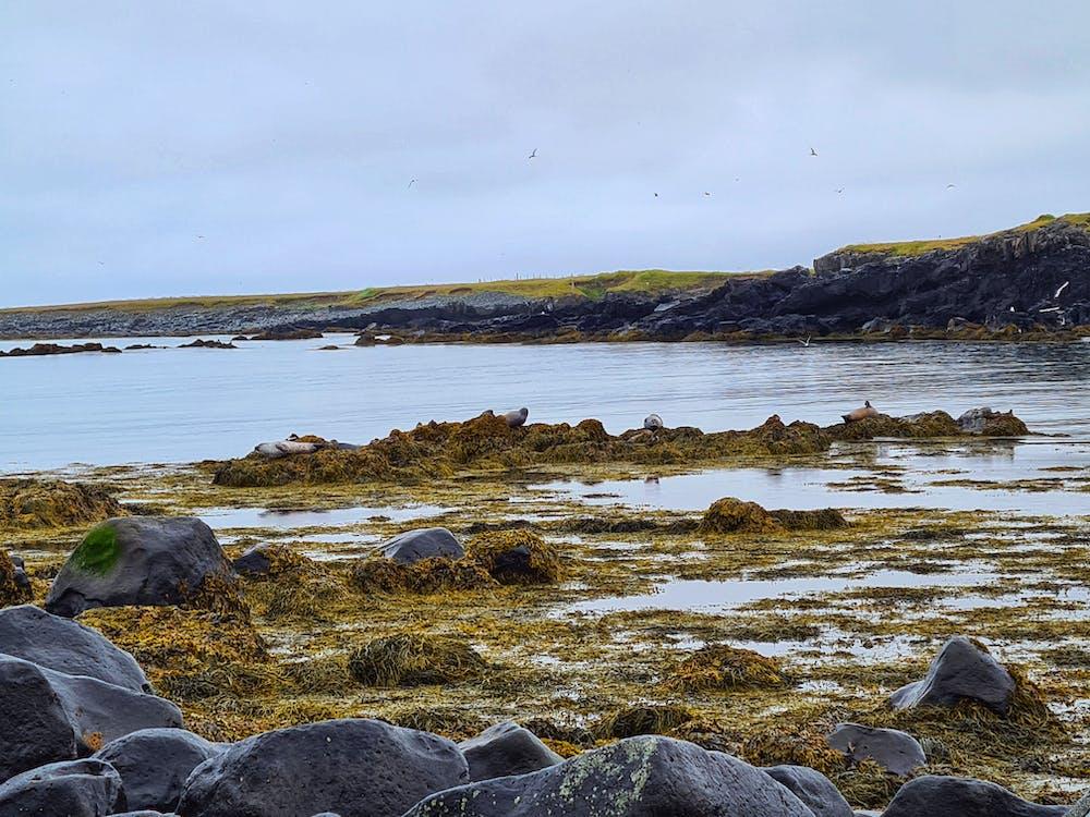 Giant stones under overgrown seagrass near sea