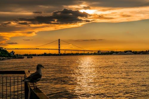 คลังภาพถ่ายฟรี ของ ciel, ciel coucher de soleil, coucher de soleil, vacances
