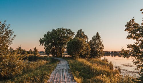 Picturesque view of empty narrow walkway from wood on grassy land with bushes and trees near calm river at sundown