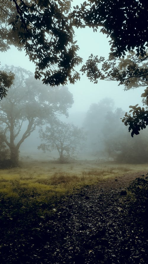 Trees growing in misty forest