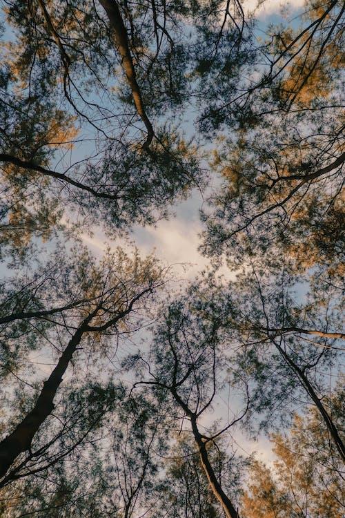 Foto profissional grátis de abundância, alto, ângulo baixo