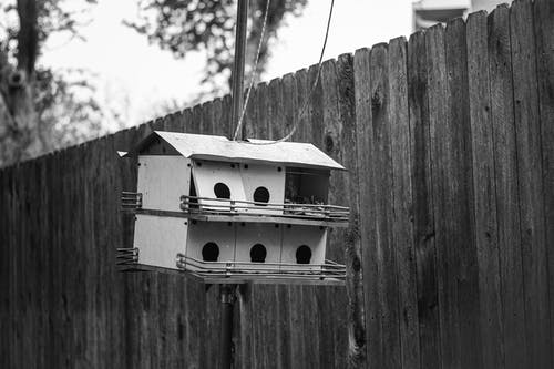 Ilmainen kuvapankkikuva tunnisteilla aita, este, linnunpönttö, Linnut