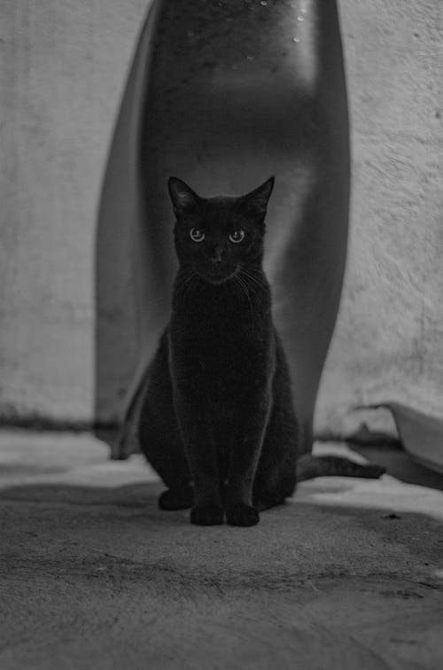 Black Cat on Gray Concrete Floor
