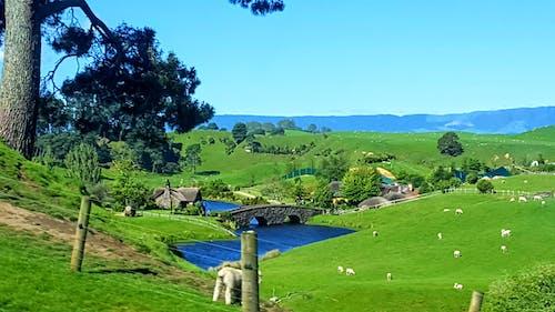 Foto stok gratis biru, bukit, danau, domba-domba