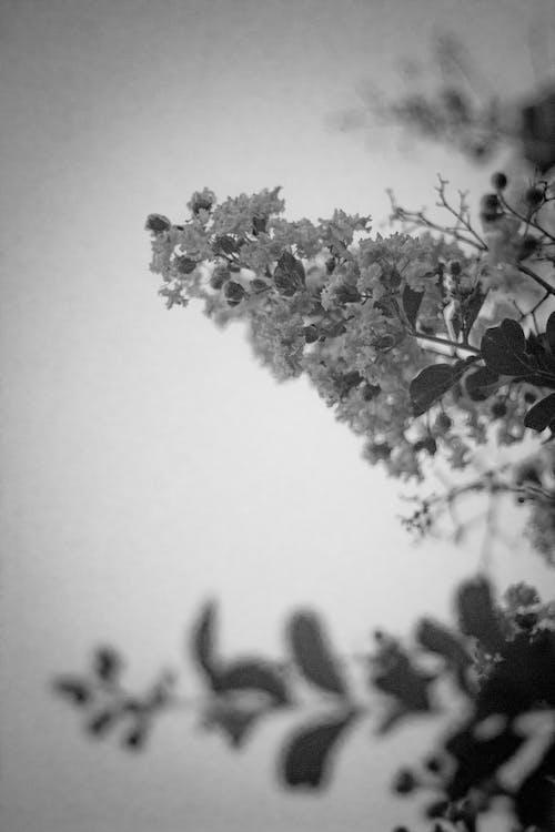 Ilmainen kuvapankkikuva tunnisteilla jousi, kevät, kreppimyrsky, kukka