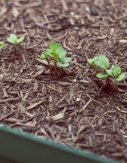 Ilmainen kuvapankkikuva tunnisteilla kasvaa, kasvi, korotettu sänky, multa