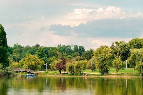 คลังภาพถ่ายฟรี ของ ต้นไม้, ทะเลสาป, ธรรมชาติ, ภูมิทัศน์